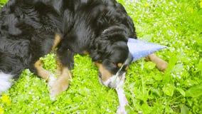 Een hond die in feestelijk GLB een been eten stock videobeelden