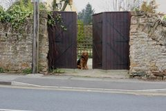 Een Hond die geduldig bij Poorten wachten Royalty-vrije Stock Afbeeldingen