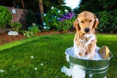 Een hond die in het bad wordt geplakt