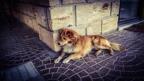 Een hond die op de grond leggen stock foto