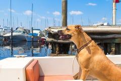 Een hond in een boot die de jachthaven verlaten stock foto's