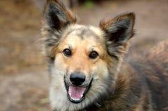 Een hond is een vriend van de mens stock foto's