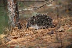 Een hond en een egel Vergadering in het bos Royalty-vrije Stock Foto's