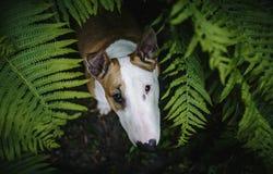 Een hond in een geheimzinnig bos Stock Foto