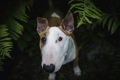 Een hond in een geheimzinnig bos Royalty-vrije Stock Afbeeldingen