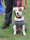 Een hond in gestreepte kleren - een piraat Stock Afbeeldingen