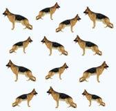 Een hond (herder) patroon Stock Afbeeldingen
