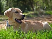 Een hond in het Gras Stock Afbeeldingen