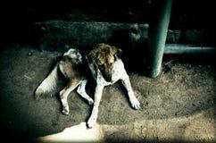 Een hond in Kambodja Stock Foto's