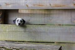 Een hond kijkt eenzaamheid stock afbeeldingen