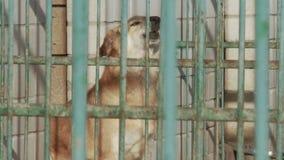 Een hond in een kooi in een een hondkinderdagverblijf of schuilplaats stock videobeelden