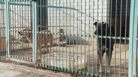 Een hond in een kooi in een een hondkinderdagverblijf of schuilplaats stock footage