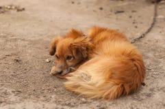 Een hond legt bij grond stock fotografie