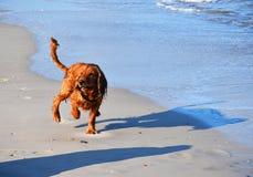 Een hond loopt door het zandstrand langs de overzeese branding royalty-vrije stock fotografie