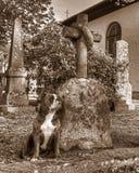 Een hond met een gebroken hart bewaakt het graf in HDR en retro stijl Stock Fotografie
