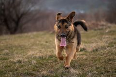 Een hond met lange oren royalty-vrije stock fotografie