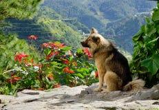 Een hond op de heuvel stock foto