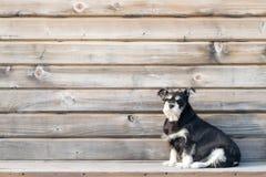 Een hond op de houten achtergrond royalty-vrije stock foto