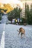 Een hond op de rijweg royalty-vrije stock foto