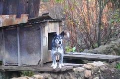 Een hond op een ketting dichtbij het hondehok Stock Foto's