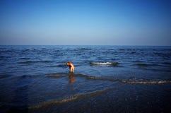 Een hond op het strand van Weizhou-Eiland royalty-vrije stock foto