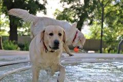 Een hond, proberen weg te koelen, neemt een bad in een fontein binnen een park, terwijl het spelen met een bal stock foto