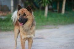 Een hond in tuin Stock Afbeeldingen
