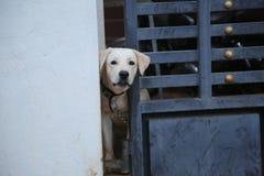 Een hond volgende deur stock fotografie