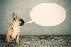 Een hond zou iets willen zeggen Royalty-vrije Stock Foto's