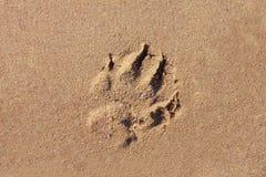 Een honddruk in het zand Royalty-vrije Stock Fotografie