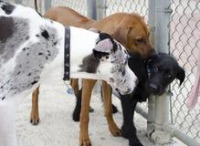 Een hondgroet Royalty-vrije Stock Afbeelding