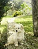 Een hondportret stock afbeeldingen