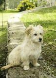 Een hondportret royalty-vrije stock afbeeldingen