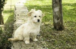 Een hondportret royalty-vrije stock foto's