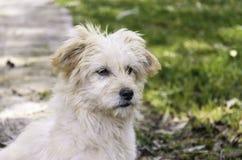 Een hondportret stock fotografie
