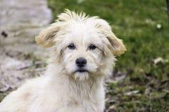 Een hondportret royalty-vrije stock foto