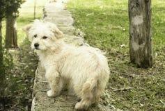 Een hondportret stock foto's