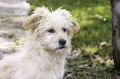 Een hondportret stock afbeelding