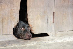 Een hondslaap Royalty-vrije Stock Foto