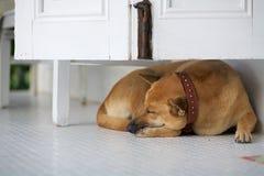 Een hondslaap onder het kabinet Stock Afbeelding