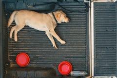 Een hondslaap op de rug van een bestelwagen Stock Fotografie