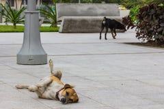 Een hondzitkamers op de cementgrond in centrum van Luquillo, Puerto Rico, de Verenigde Staten van Amerika royalty-vrije stock afbeelding
