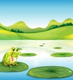 Een hongerige kikker boven waterlily Royalty-vrije Stock Afbeeldingen