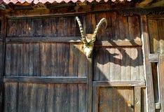 Een hoofd en hoornen van een dierlijk buitenhuis Stock Foto's