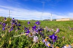 Een hoogtepunt van de plateauweide van bloemen royalty-vrije stock foto's