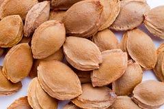 Een hoop van abrikozenkuilen stock fotografie