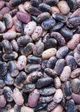 Een hoop van nierbonen Stock Foto