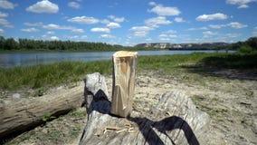 Een hout van de mensenkarbonade met sterke slagen van een bijl stock video