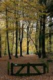 Een houten barrière in een herfst-gekleurd bos Stock Afbeeldingen
