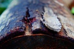 een houten boomstam stock foto's
